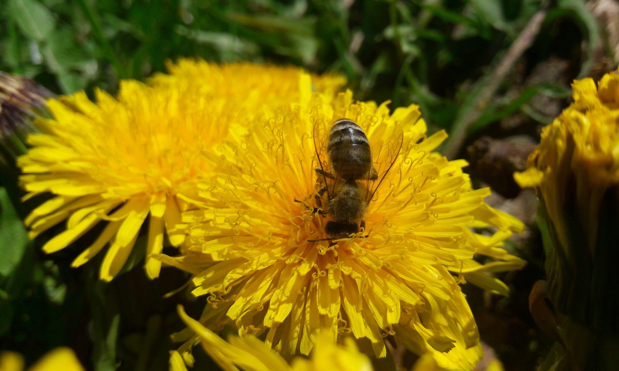 Honig aus der Nachbarschaft